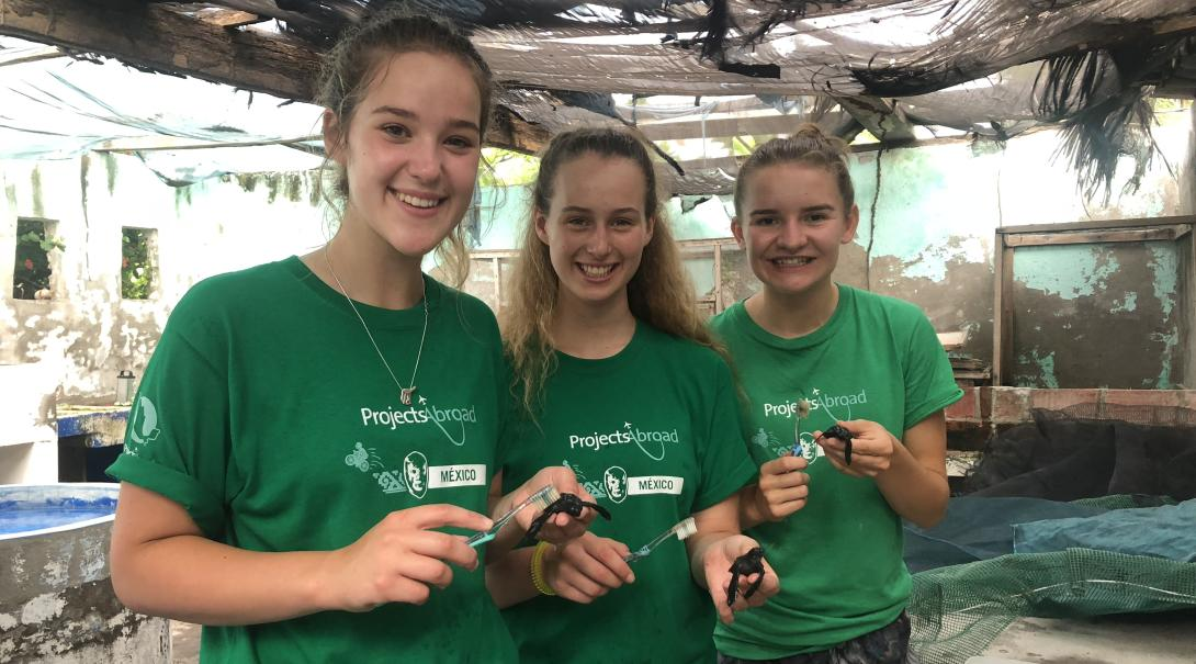 Projects Abroad High School Special volunteers cleaning the shells of baby turtles with toothbrushes at our conservation project in Mexico.